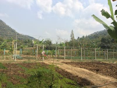 Jungle Aid village assessment